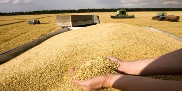 نیاز به واردات بیش از ۶ میلیون تن گندم در سال جاری