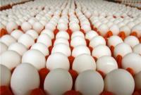 هرشانه تخم مرغ ۵۵ تا ۶۵ هزارتومان!
