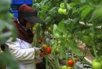 قطع برق، یک چهارم باغات را سرگردان کرد/ وقتی زور وزارت نیرو به کشاورزی رسید!